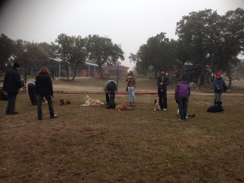Practicas de obediencia curso 2013-14
