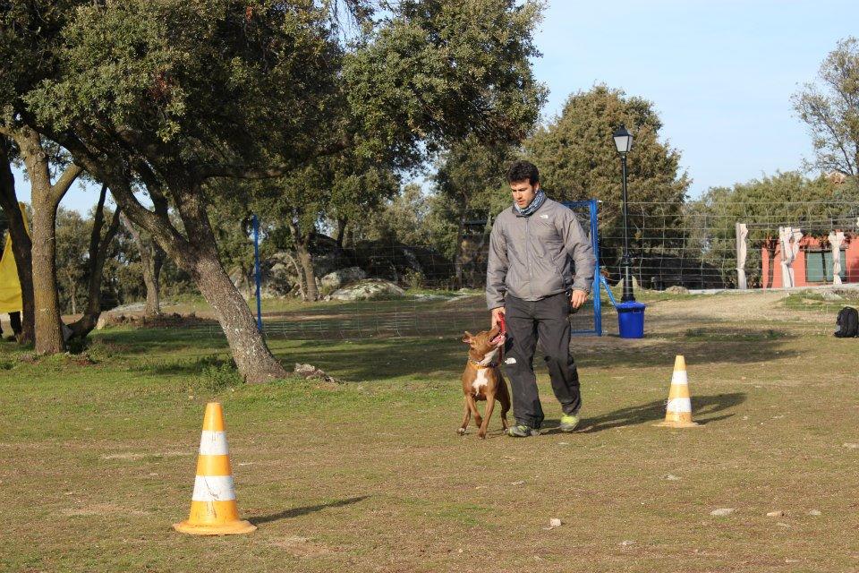 Alumno de EFPC MADRID 2012-2013 . J.L Gonzalez con su perro nesta