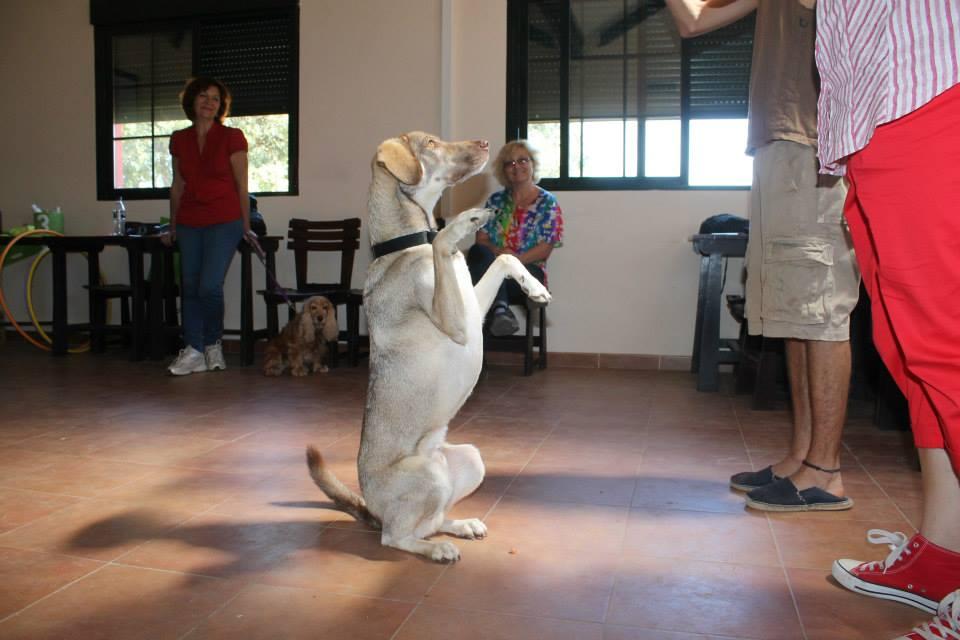 curso intensivo de Terapia asitida con animales 2013
