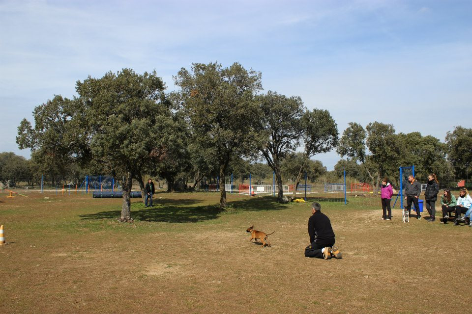 llamada cachorro EFPC 2012-2013