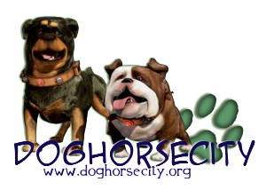 log dog and horse city