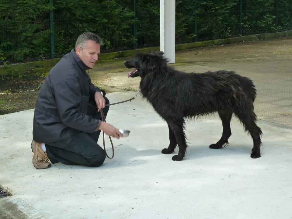 LA CONTIGÜIDAD Y LA CONTINGENCIA : «Los fantasmas» del adiestramiento canino.
