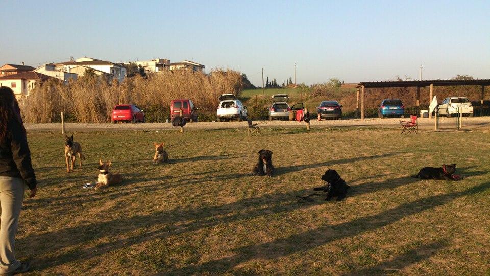 perros de los alumnos  2012-2013 EFPC Barcelona