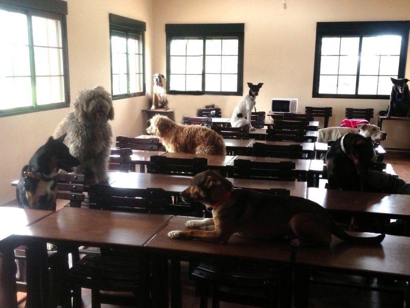 perros en el aula