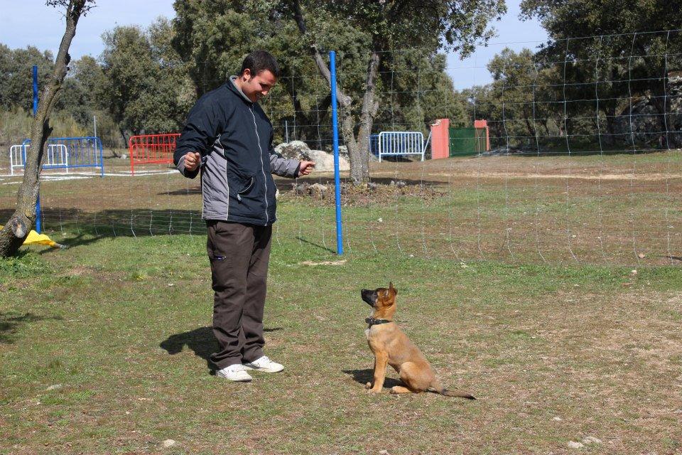 trabajo con cachorros . alumno Borja Vidal EFPC 2012-2013