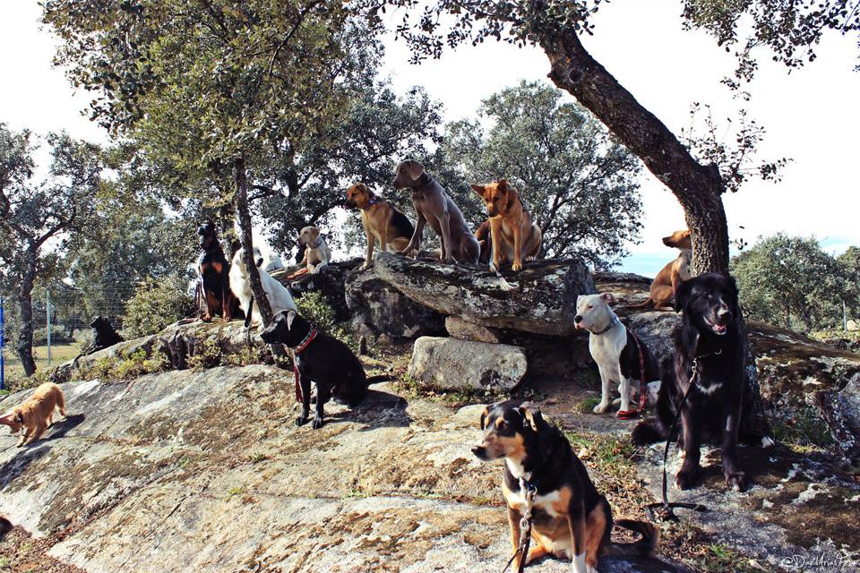 Los perros de la generación perdida