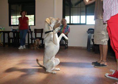 curso-intensivo-de-Terapia-asitida-con-animales-2013