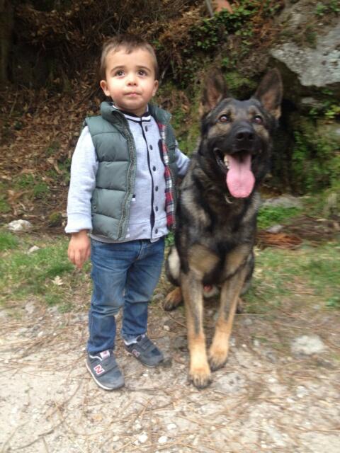 El perro de familia