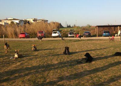 perros-de-los-alumnos-2012-2013-EFPC-Barcelona