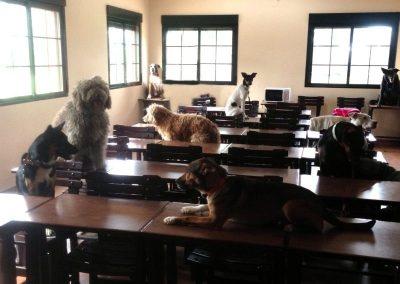 perros-en-el-aula