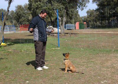 trabajo-con-cachorros-.-alumno-Borja-Vidal-EFPC-2012-2013